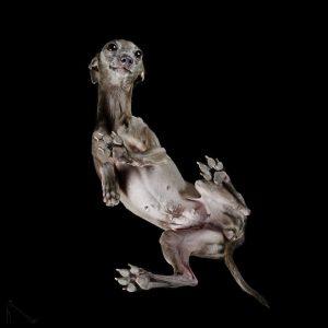 3-Under-dogs-58ec83ab9f7ba__880